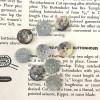 Glitzer Perlmuttknopf - Silber