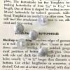 Halbkugel-Knopf - Silber